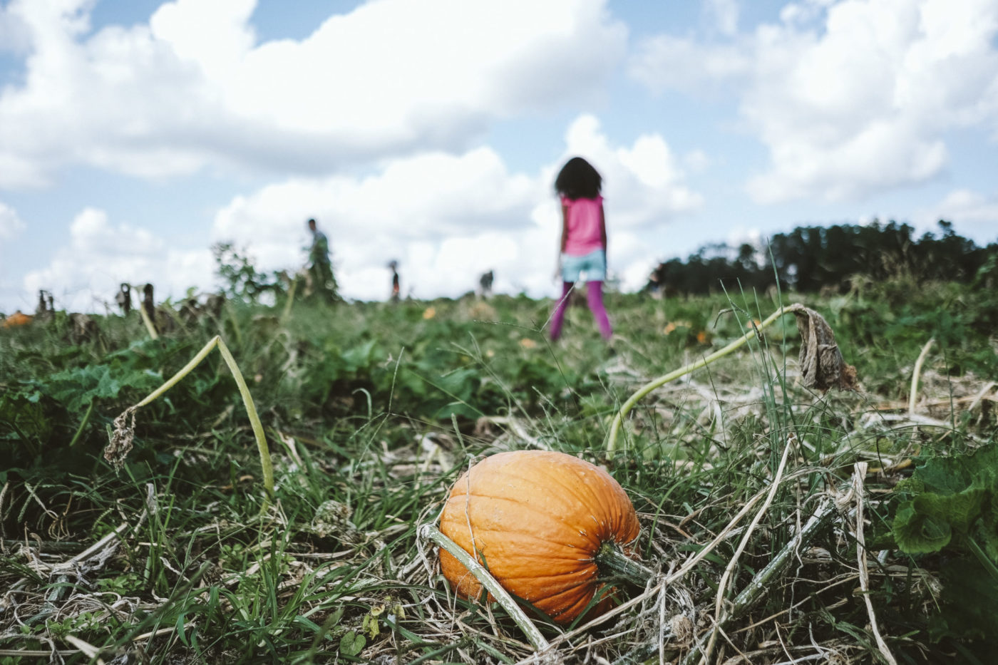 Pumpkin patch at Adventure Farms
